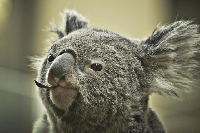 オーストラリアのお土産としておすすめの海外土産